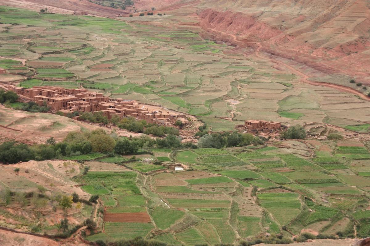 terraced-crops